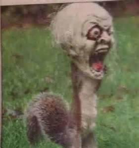 Scary Crazy Squirrel
