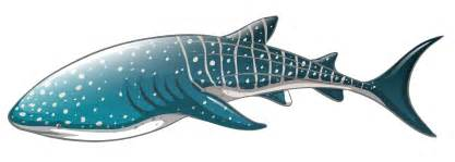 and white wedding whale shark png clipart best web clipart