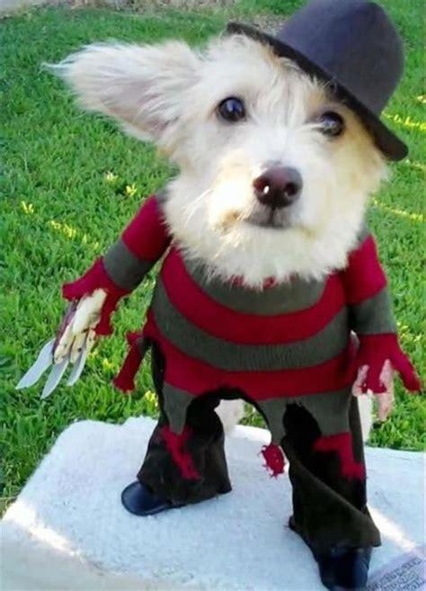 dogs dressed  freddy krueger riot daily