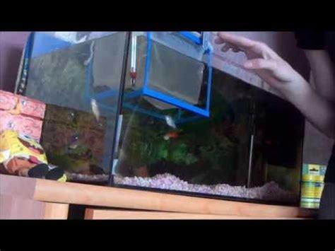 comment nettoyer plante d aquarium la r 233 ponse est sur admicile fr