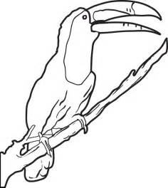 Toucan Coloring Page Parrots And Other Birds Pinterest 2910091