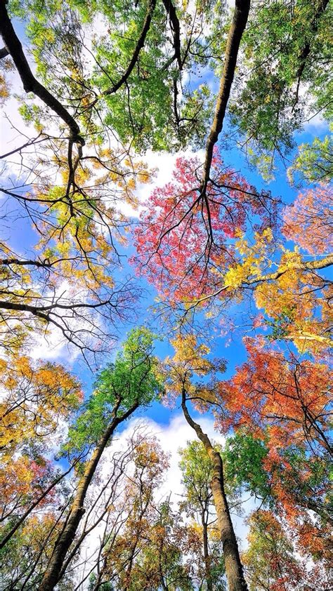 Autumn Season Wallpapers For Phone by Sony Xperia Z5 Wallpaper With Abstract Colorful Background