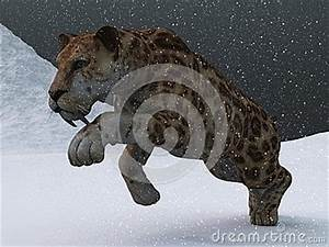 Tundra Animals Sabre Toothed Tiger In Ice Age Blizzard Royalty Free Stock