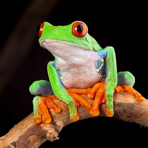 spectacular frogs