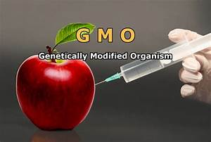 How Are Genetically Modified Species Created   U00bb Science Abc