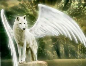 Life Above And Under The Clouds *Winged Wolf Rp* - members