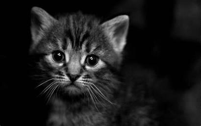 Wallpapers Dark Kittens Animals Cats Kitten Sad