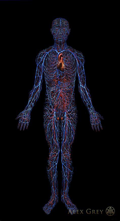 cardiovascular system alex grey