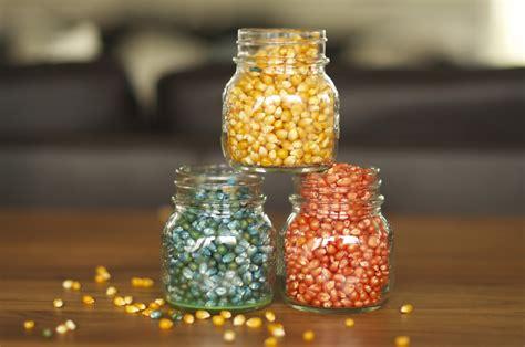 colored popcorn kernels multi colored popcorn kernels
