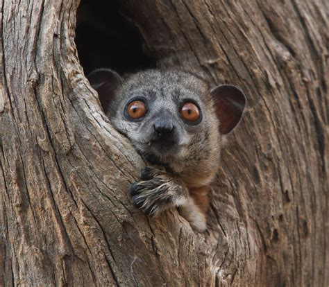 Madagascar Privately Guided Safaris