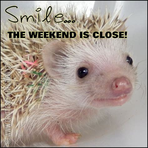 Hedgehog Meme - 1000 images about hedgehog memes funnies quotes and misc millermeade farm s critter