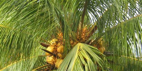Jatuh Dari Pohon Kelapa Dan Membentur Aspal, Hamzah