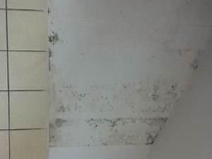 Schimmelpilz Im Badezimmer : schimmel im bad hinter der tapete schimmelpilz forum ~ Sanjose-hotels-ca.com Haus und Dekorationen