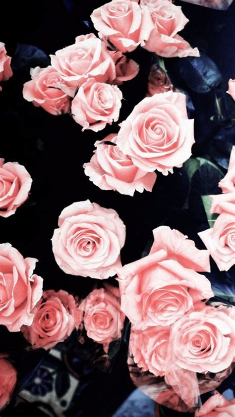 Need help finding a new wallpaper? Pink Rose Girly Wallpaper For Mobile | 2020 Cute Wallpapers