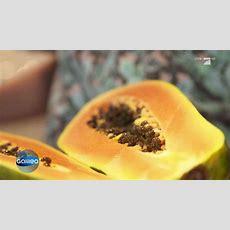 Pfefferkörner Aus Papayakernen  So Wird Es Gemacht