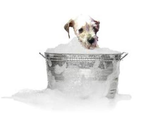 Dog Bath and De Skunk Home Remedy