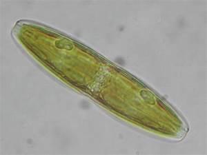 Nano Silica  U0026 Diatoms