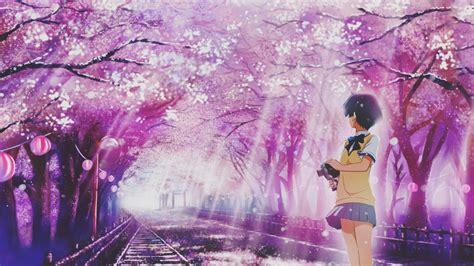 Anime Cherry Blossom Wallpaper - wallpaper anime cherry blossom flower