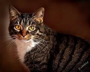 Items similar to Cat Photograph Portrait Tabby Cat Dark ...