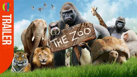 brand   zoo cbbc youtube