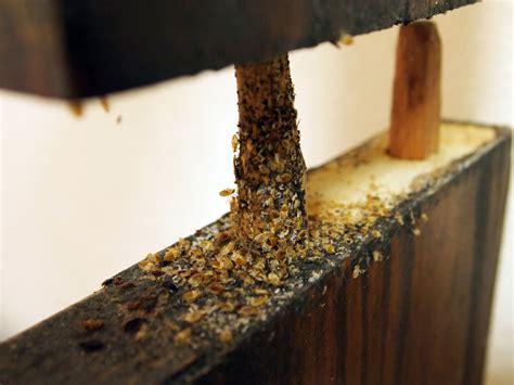 bed bug infestation on furniture bed bug fix