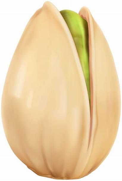 Pistachio Clipart Nuts Transparent Yopriceville