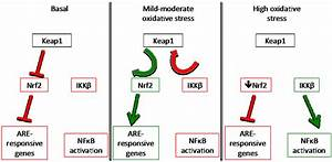 Nutrients | Free Full-Text | Dietary Regulation of Keap1 ...