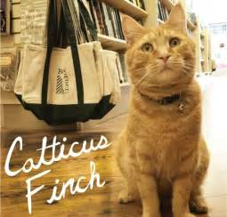 punny cat names 25 literary pun names for your cat cat names i am and