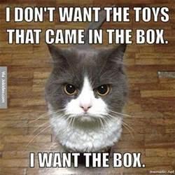 cat memes cat pictures meme jokes memes pictures