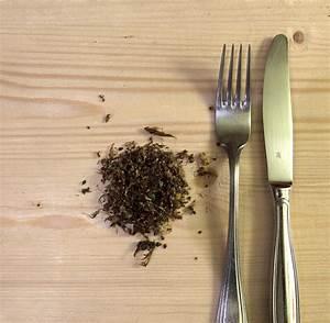 Ameisen Mit Flügel : insekten co die bizarren dschungel snacks bilder fotos welt ~ Buech-reservation.com Haus und Dekorationen