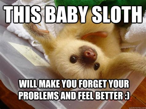 Funny Feel Better Meme - this baby sloth will make you forget your problems and feel better feel better sloth
