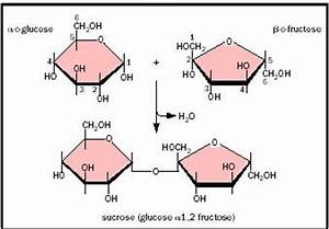 Carbohydrates Biology | www.pixshark.com - Images ...