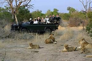 Why Timbavati Game Reserve? | Wild Wings Safaris Blog