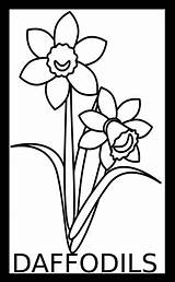 Daffodils sketch template