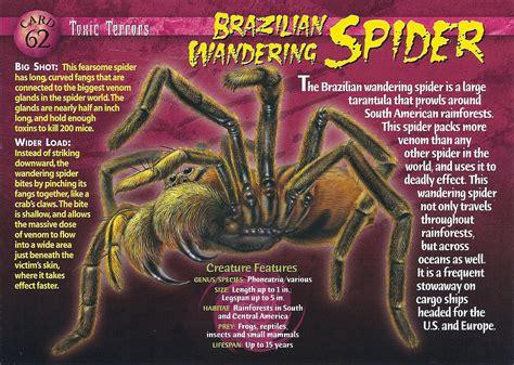 brazilian wandering spider weneedfun
