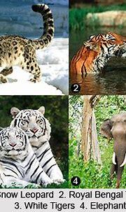 Mammals wild animal best blog: May 2016