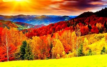 Nature Autumn Fall Leaves Season Landscape Seasons