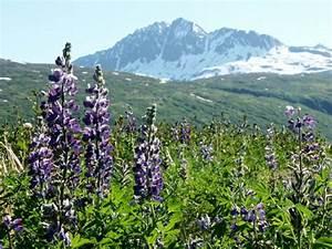 Biogeoclimatic Zones Of British Columbia Alpine Tundra