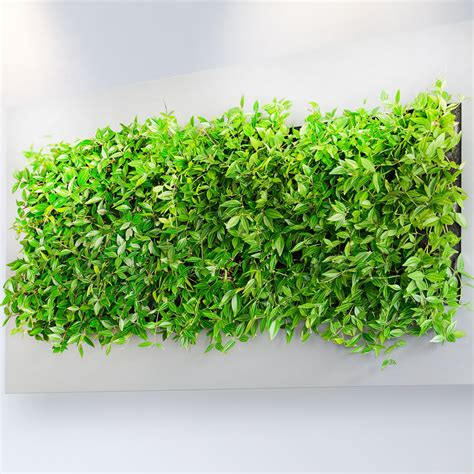 Pflanzen An Wand by Plant Walls And Live Wall Eco Green Office Plants