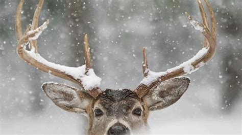 Winter Animal Desktop Wallpaper - winter animal wallpapers widescreen free
