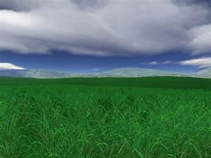 Green, Fields, 3d, Screensaver, Enjoy, The, Beauty, Of, Lush