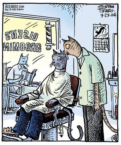 Funny Hairdresser Memes - barber cat