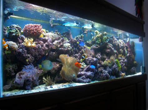 tomandtinas reef tanks photo id  full version