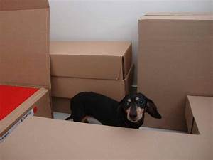 bicontinental dachshund three benefits of an electric dog With electric dog fence installation cost