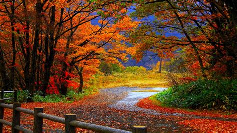 Fall Desktop Backgrounds by Free Hd Fall Wallpapers Make Your Screen Shine Brighter