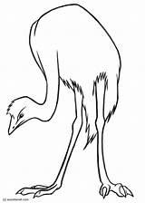 Emu Disegno Coloring Colorare Malvorlage Ausmalbilder Vogel Bild Popular Ausdrucken Kostenlose Zum Herunterladen Grosse Abbildung Scarica Immagine Grande sketch template