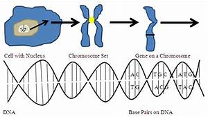 13 06 03  The Evolution Of Genetic Engineering