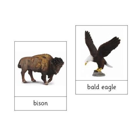 montessori animals  north america  file animals