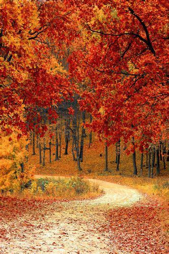 autumn driveway orange leaves background printed backdrop