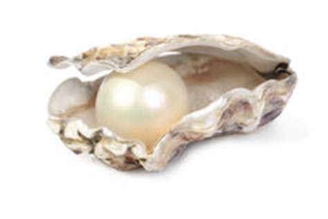 pearl stock  images pictures  images